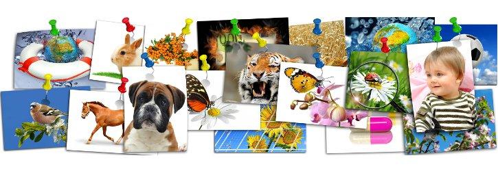 Bilder an der Pinnwand Foto Fotolia